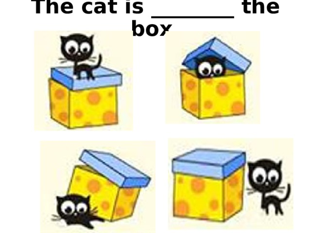 The cat is ________ the box.