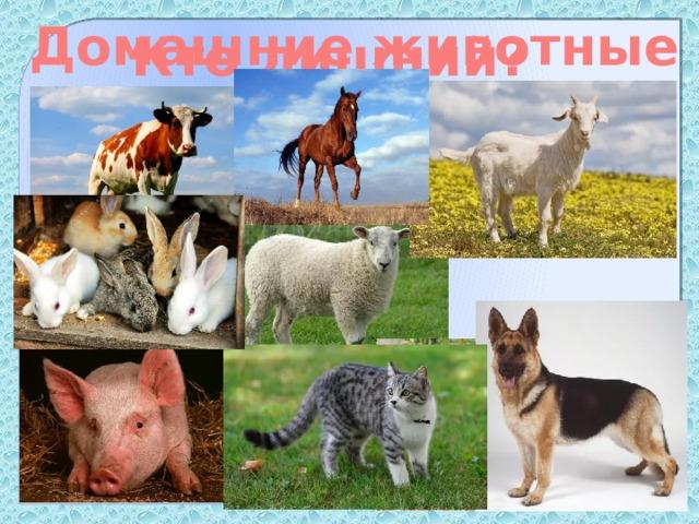 Домашние животные Кто лишний?
