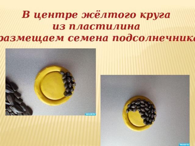 В центре жёлтого круга из пластилина размещаем семена подсолнечника