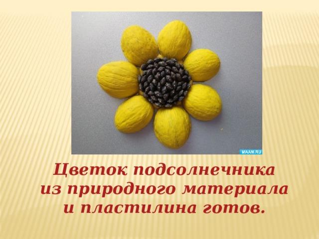 Цветок подсолнечника из природного материала и пластилина готов.