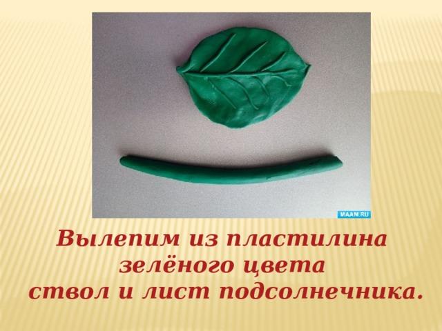 Вылепим из пластилина зелёного цвета ствол и лист подсолнечника.