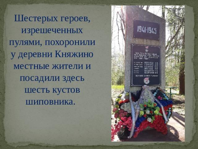 Шестерых героев, изрешеченных пулями, похоронили у деревни Княжино местные жители и посадили здесь шесть кустов шиповника.