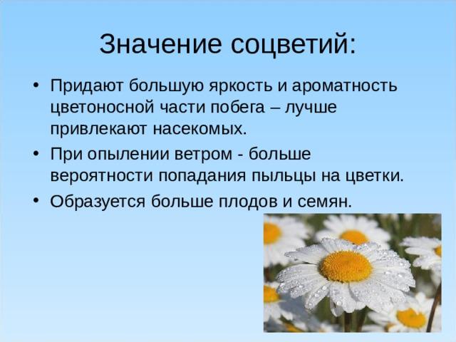 Значение соцветий: