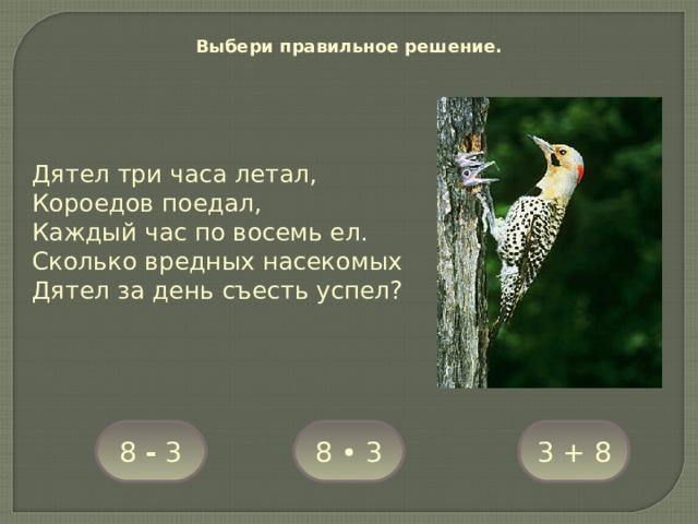 Выбери правильное решение. Дятел три часа летал, Короедов поедал, Каждый час по восемь ел. Сколько вредных насекомых Дятел за день съесть успел? 8 • 3 8 - 3 3 + 8