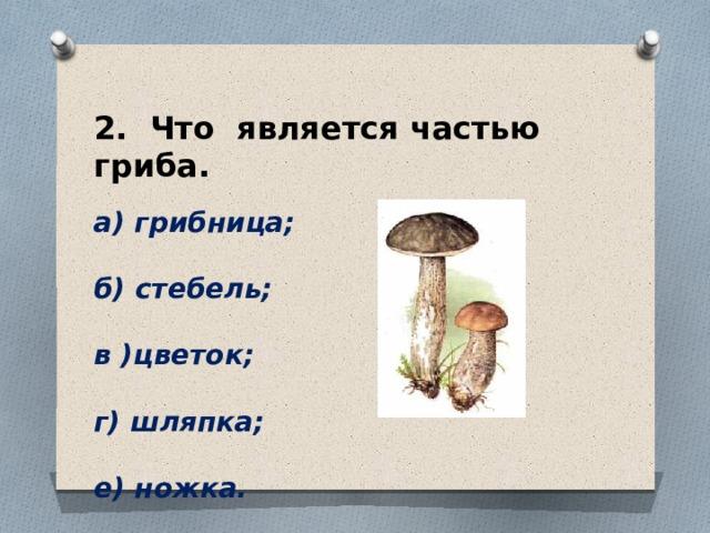 2. Что является частью гриба.  а) грибница;  б) стебель;  в )цветок;  г) шляпка;  е) ножка.