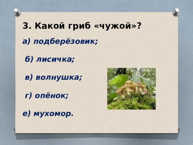 3. Какой гриб «чужой»?  а) подберёзовик;   б) лисичка;   в) волнушка;   г) опёнок;  е) мухомор.