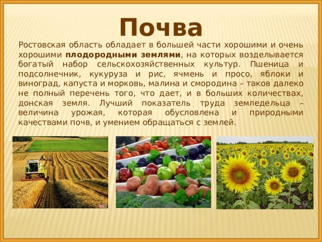 Почва Ростовская область обладает в большей части хорошими и очень хорошими плодородными землями , на которых возделывается богатый набор сельскохозяйственных культур. Пшеница и подсолнечник, кукуруза и рис, ячмень и просо, яблоки и виноград, капуста и морковь, малина и смородина – таков далеко не полный перечень того, что дает, и в больших количествах, донская земля. Лучший показатель труда земледельца – величина урожая, которая обусловлена и природными качествами почв, и умением обращаться с землей.