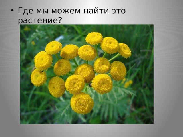 Где мы можем найти это растение?