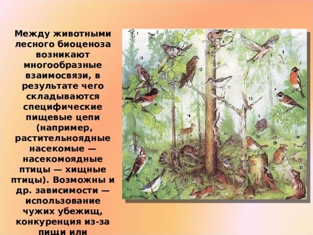 Между животными лесного биоценоза возникают многообразные взаимосвязи, в результате чего складываются специфические пищевые цепи  (например, растительноядные насекомые — насекомоядные птицы — хищные птицы). Возможны и др. зависимости — использование чужих убежищ, конкуренция из-за пищи или территории, паразитизм и т. д.