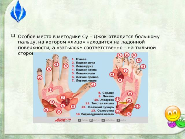 Особое место в методике Су – Джок отводится большому пальцу, на котором «лицо» находится на ладонной поверхности, а «затылок» соответственно – на тыльной стороне руки.