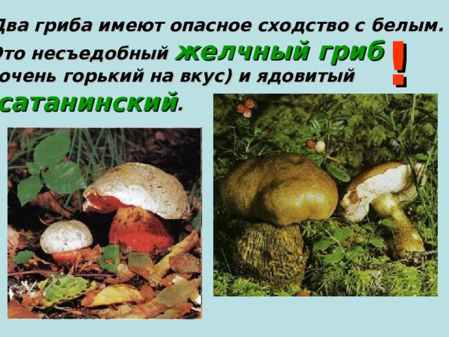 Два гриба имеют опасное сходство с белым. Это несъедобный желчный гриб  (очень горький на вкус) и ядовитый  сатанинский . !