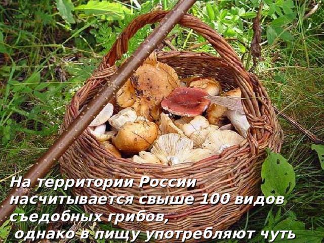 На территории России насчитывается свыше 100 видов съедобных грибов,  однако в пищу употребляют чуть более 30 видов грибов