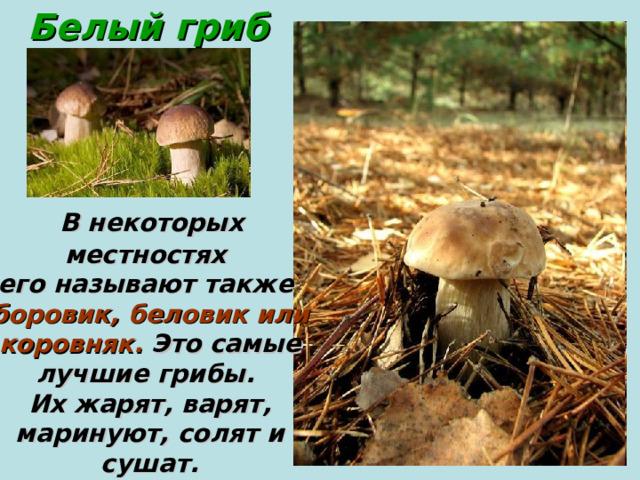 Белый  гриб  В некоторых местностях его называют также боровик, беловик или  коровняк. Это самые лучшие грибы. Их жарят, варят,  маринуют, солят и сушат.