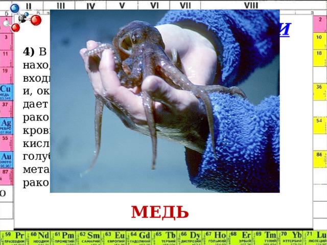 Химия в БИОЛОГИИ 4) В крови человека находится железо, которое входит в состав гемоглобина и, окисляясь на воздухе, дает алую окраску крови. У ракообразных и моллюсков кровь при насыщении кислородом становится голубого цвета. Какой металл находится в крови ракообразных? МЕДЬ