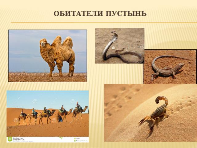 Обитатели пустынь