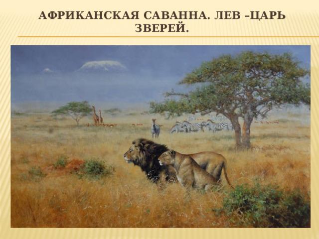 Африканская саванна. Лев –царь зверей.