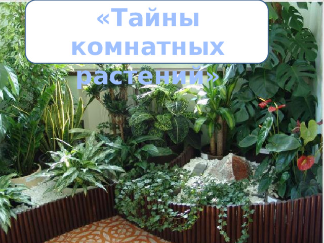«Тайны комнатных растений»