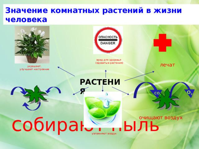 Значение комнатных растений в жизни человека вред для здоровья  (ядовитые растения) лечат украшают, улучшают настроение РАСТЕНИЯ О 2 СО 2 с обирают пыль очищают воздух увлажняют воздух