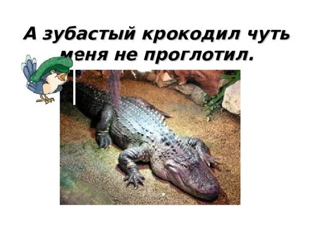 А зубастый крокодил чуть меня не проглотил.