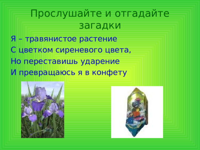Прослушайте и отгадайте загадки Я – травянистое растение С цветком сиреневого цвета, Но переставишь ударение И превращаюсь я в конфету