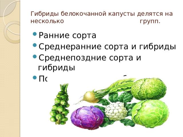 Гибриды белокочанной капусты делятся на несколько групп.