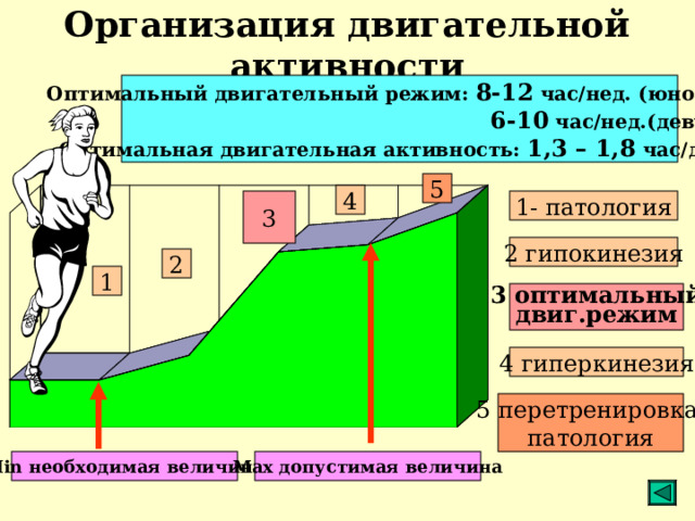 Организация двигательной активности Оптимальный двигательный режим: 8-12 час/нед. (юноши);  6-10 час/нед.(девушки) Оптимальная двигательная активность: 1,3 – 1,8 час/день 5 4 3 1- патология 2 гипокинезия 2 1 3 оптимальный двиг.режим 4 гиперкинезия 5 перетренировка, патология Min необходимая величина Max допустимая величина