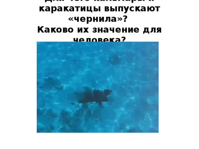 Для чего кальмары и каракатицы выпускают «чернила»?  Каково их значение для человека?