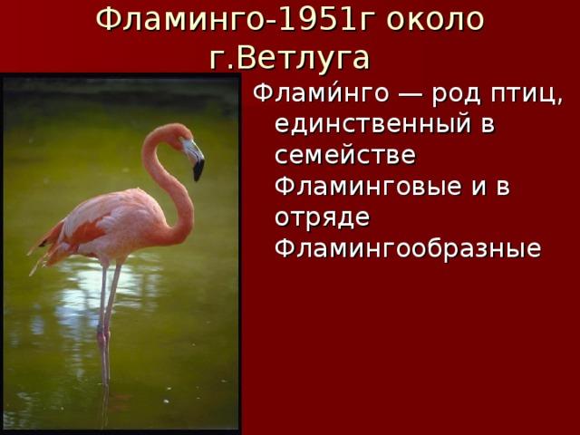 Фламинго-1951г около г.Ветлуга Флами́нго — род птиц, единственный в семействе Фламинговые и в отряде Фламингообразные