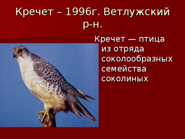 Кречет – 1996г. Ветлужский р-н. Кречет — птица из отряда соколообразных семейства соколиных