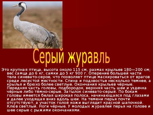 Это крупная птица, высота около 115см, размах крыльев 180—200см; вес самца до 6кг, самки до 5 кг 900г. Оперение большей части тела синевато-серое, что позволяет птице маскироваться от врагов среди лесистой местности. Спина и подхвостье несколько темнее, а крылья и брюхо более светлые. Окончания крыльев чёрные. Передняя часть головы, подбородок, верхняя часть шеи и уздечка чёрные либо тёмно-серые. Затылок синевато-серый. По бокам головы имеется белая широкая полоса, начинающаяся под глазами и далее уходящая вниз вдоль шеи. На темени перья почти отсутствуют, а участок голой кожи выглядит красной шапочкой. Клюв светлый. Ноги чёрные. У молодых журавлей перья на голове и шее серые с рыжими окончаниями.