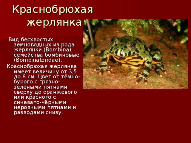 Краснобрюхая  жерлянка  Вид бесхвостых земноводных из рода жерлянки (Bombina) семейства бомбиновые (Bombinatoridae). Краснобрюхая жерлянка имеет величину от 3,5 до 6 см. Цвет от тёмно-бурого с грязно-зелёными пятнами сверху до оранжевого или красного с синевато-чёрными неровными пятнами и разводами снизу.