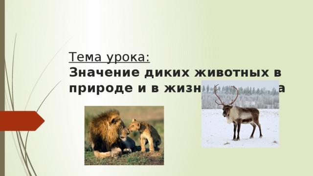 Тема урока:  Значение диких животных в природе и в жизни человека