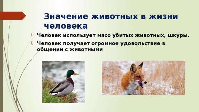 Значение животных в жизни человека