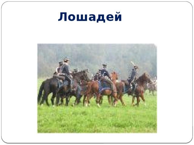Лошадей