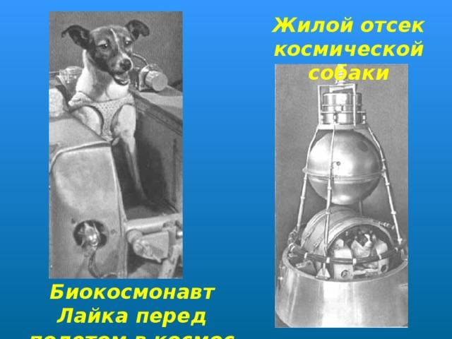 Жилой отсек космической собаки Биокосмонавт Лайка перед полетом в космос