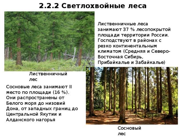 на территории россии леса занимают