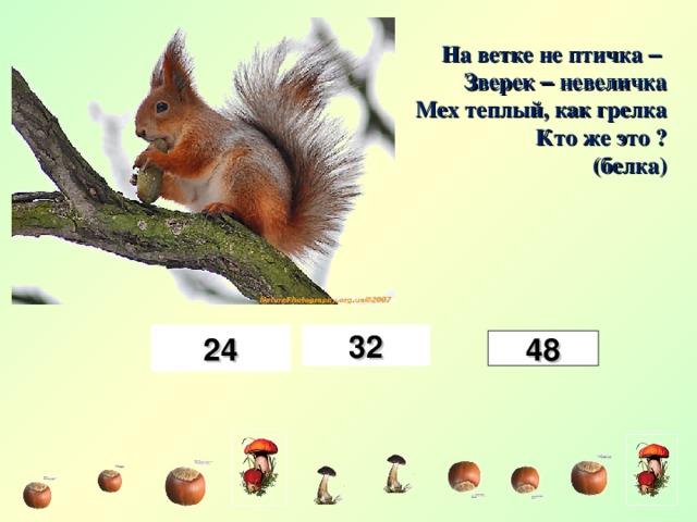 На ветке не птичка –  Зверек – невеличка Мех теплый, как грелка Кто же это ? (белка) 24 32 48
