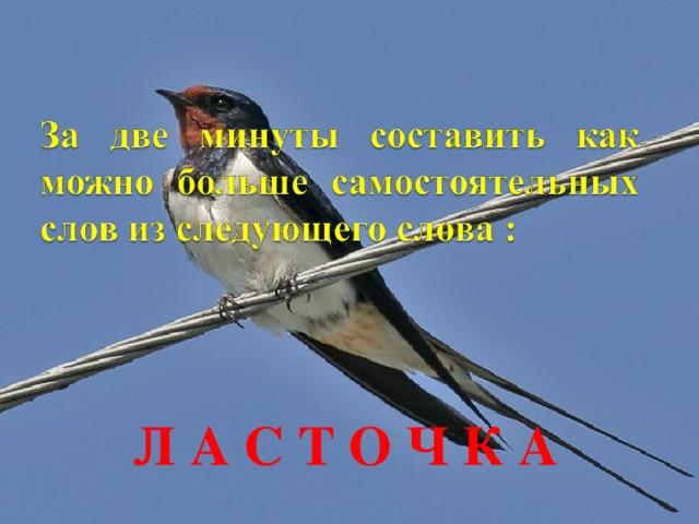 Л А С Т О Ч К А
