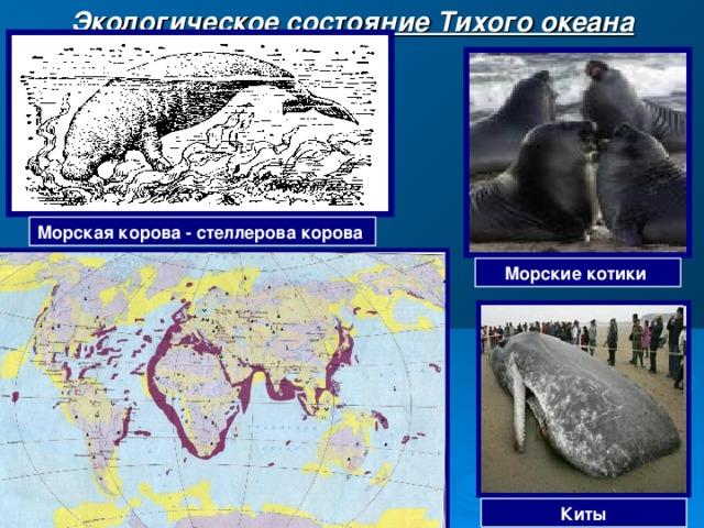 Экологическое состояние Тихого океана Морская корова - стеллерова корова Морские котики Киты