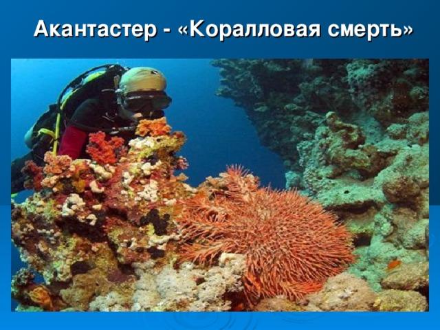 Акантастер - « Коралловая смерть»