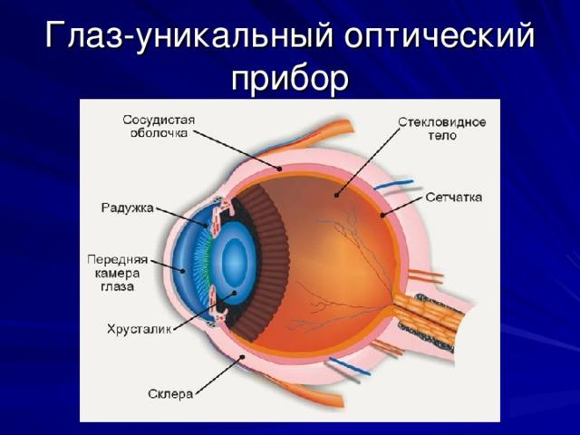 Глаз-уникальный оптический прибор