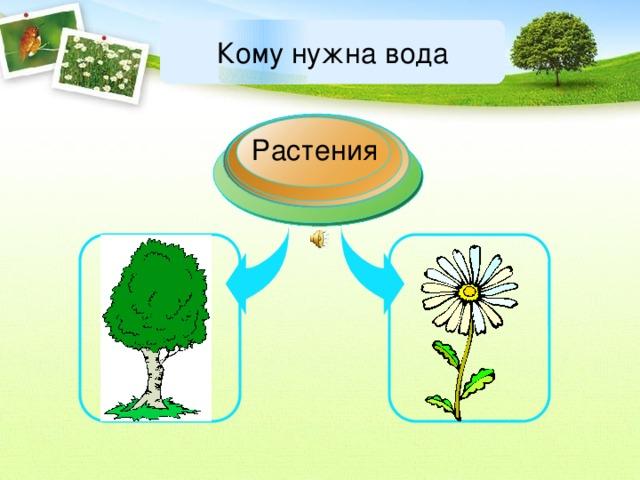 Кому нужна вода Растения