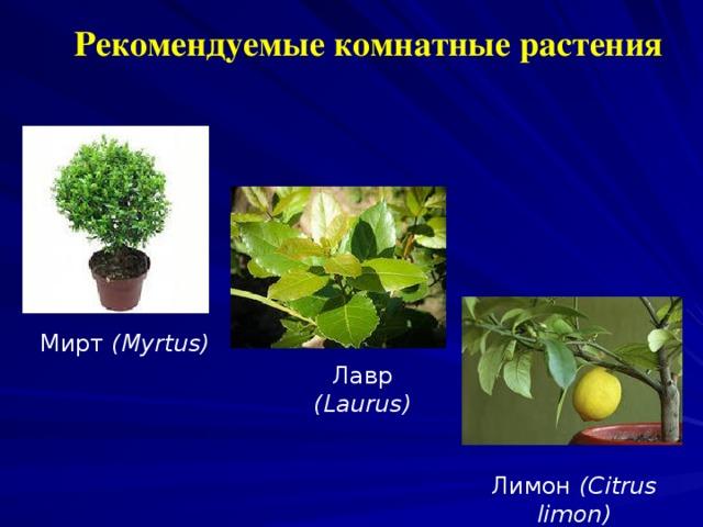 Рекомендуемые комнатные растения Мирт (Myrtus) Лавр  (Laurus) Лимон ( Citrus limon )