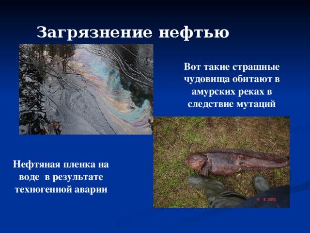 Загрязнение нефтью  Вот такие страшные чудовища обитают в амурских реках в следствие мутаций Нефтяная пленка на воде в результате техногенной аварии