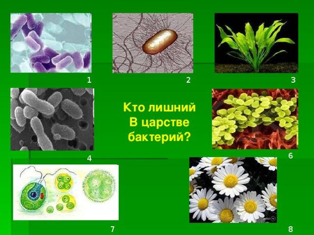 1 3 2 Кто лишний В царстве бактерий?  6 4 7 8