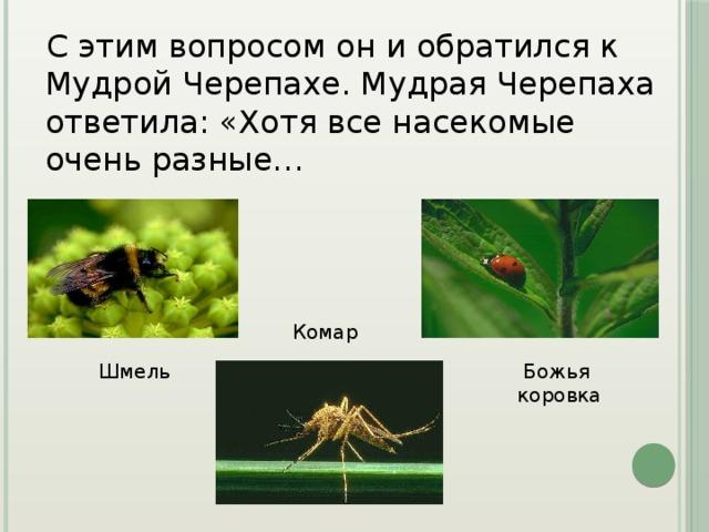 С этим вопросом он и обратился к Мудрой Черепахе. Мудрая Черепаха ответила: «Хотя все насекомые очень разные… Комар Шмель Божья коровка