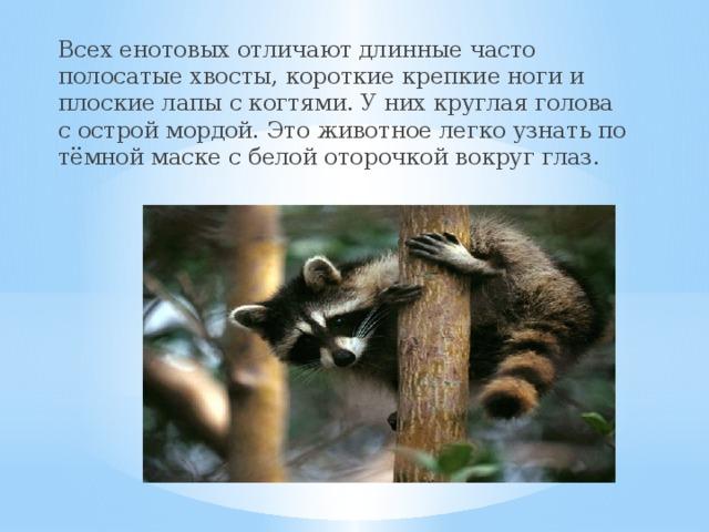 Всех енотовых отличают длинные часто полосатые хвосты, короткие крепкие ноги и плоские лапы с когтями. У них круглая голова с острой мордой. Это животное легко узнать по тёмной маске с белой оторочкой вокруг глаз.