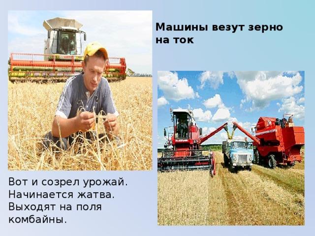 Машины везут зерно на ток Вот и созрел урожай. Начинается жатва. Выходят на поля комбайны.