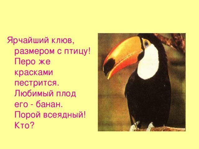 Ярчайший клюв, размером с птицу!  Перо же красками пестрится.  Любимый плод его - банан.  Порой всеядный! Кто?