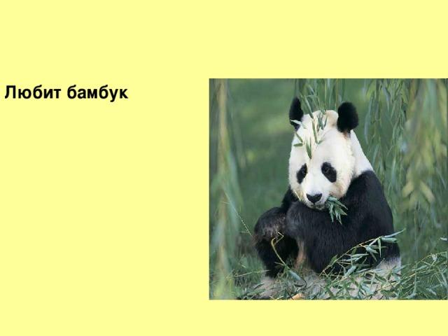 Любит бамбук